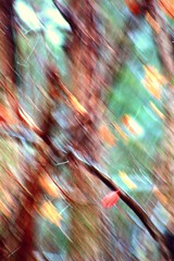 ICM...abstract of autumn....(Explored) (Patlees) Tags: icm abstract fall 2019