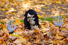 Oh it's Beginning to Look a Lot like.... (Katrina Wright) Tags: dsc7378 skull scream face hands skeleton scary halloween leaves autumn fall gold yellow foliage