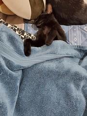 20191022_132201 (Noelas) Tags: 2019 bibi 阿比 阿bi 寵物 pet 貓 cat 猫 ねこ samsungsmn9750 samsung smn9750 note10 note10plus note 手機 smartphone