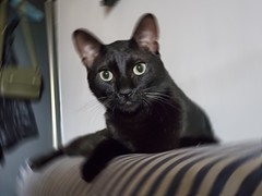 20191008_131106 (Noelas) Tags: 2019 bibi 阿比 阿bi 寵物 pet 貓 cat 猫 ねこ samsungsmn9750 samsung smn9750 note10 note10plus note 手機 smartphone