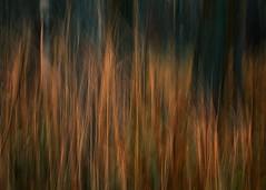 Grass fire (Tracy Metz) Tags: fire grass movement color autumn intentionalcameramovement icm blur