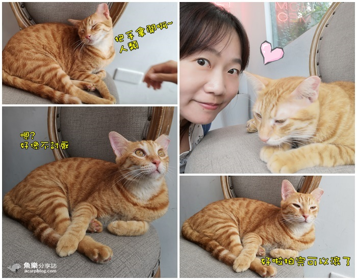 【高雄前金】外帶一隻貓 Miao To GO|超療癒貓咪網美咖啡館 @魚樂分享誌