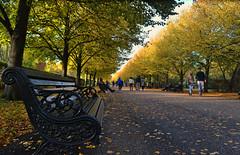 Perspective (Giulia C) Tags: london uk londra regentspark park autumn