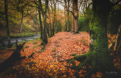 Autumn Cover (RTA Photography) Tags: autumn leaves riverteign devon seasons trees woodland colours nature rtaphography nikon d750 outdoors moss trunks nikkor