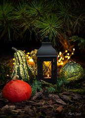 Hallween (Magda Banach) Tags: halloween colors decorativepumpkins evening flora garden lights nature outdoor outside plants tiul ww stilllife