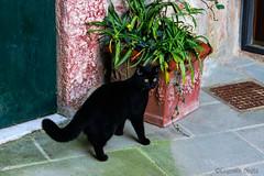 Gatto vieni qui... - Cat come here ... (Eugenio GV Costa) Tags: approvato gatto gatti cat cats animal animali domesrici
