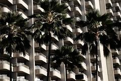 DSCF4185 (jhnmccrmck) Tags: hawaii honolulu waikiki fujifilm fujifilmxt1 xt1 xf1855mm classicchrome palms