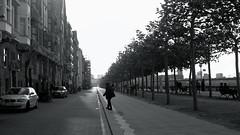loneliness@Bank of the Rhine, Düsseldorf (Amselchen) Tags: canon bnw blackandwhite mono monochrome germany season ef40mmf28stm pancake autumn canoneos6dmarkii street streettrees streetphotography city building people