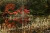 Autumn Deepens (seiji2012) Tags: japan nagano akiyamago 紅葉 長野県 秋山郷 栄村 天池 happyplanet asiafavorites