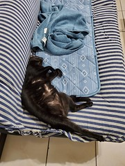 20191008_142929 (Noelas) Tags: 2019 bibi 阿比 阿bi 寵物 pet 貓 cat 猫 ねこ samsungsmn9750 samsung smn9750 note10 note10plus note 手機 smartphone