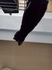 20190925_125457 (Noelas) Tags: 2019 bibi 阿比 阿bi 寵物 pet 貓 cat 猫 ねこ samsungsmn9750 samsung smn9750 note10 note10plus note 手機 smartphone