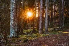 Shining Through (dennishumbla) Tags: dennishumbla photo sel55f18z