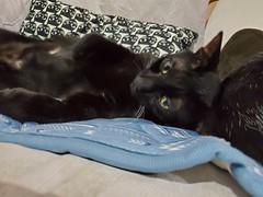 20191022_132337 (Noelas) Tags: 2019 bibi 阿比 阿bi 寵物 pet 貓 cat 猫 ねこ samsungsmn9750 samsung smn9750 note10 note10plus note 手機 smartphone