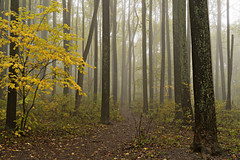 Into The Woods (Laymons Pics) Tags: trees virginia shenandoahnationalpark skylinedrive mist fog fallfoliage sonya7iii sonyfe2470za