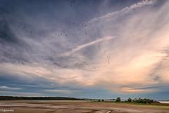24102015-DSC_0098 (vidjanma) Tags: lacduder grues nuages soir