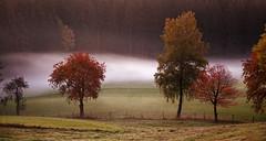 Morgennebel (Mariandl48) Tags: morgennebel buntebäume sommersgut wenigzell steiermark austria