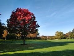 Autumn Trees (ripplestone review) Tags: glastonbury abbey trees autumn leaves