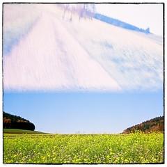 Hallowe'en in the fields 7 (John Teulon Ladd) Tags: analog film meinfilmlab wwwmeinfilmlabde meoptaflexaret flexaret riedböhringen mediumformat kodakportra160 blackforest