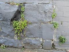 Stone (Pat M2007) Tags: cf19 stone