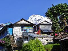 Home, sweet home !! (Lopamudra !) Tags: lopamudra lopamudrabarman lopa landscape annapurnabasecamp abc annapurnasouth trek home village nepal himalaya himalayas nature greetings greeting trekking hiking basecamp beauty beautiful