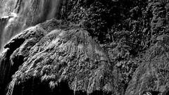 "MEXICO, Yukatan , Chiapas ,  Sumidero Canyon, Steile Felsen und Wasserfälle, serie, 19354/12049 (roba66) Tags: tuxtla gutiérrez río grijalva cañón sumidero del canyon schlucht lake see mexiko mexico mécico méjico nordamerika northamerica zentralamerika yukatanhalbinsel rundreise 2017 roba66 yucatán chiapas water wasse rio fluss urlaub reisen travel explore voyages visit tourism landschaft landscape paisaje nature natur naturalezza mountains montana mountain berge range felsen rock rocks flusslandschaft riverscape river wasser waterscape waterfall wasserfall cascadas monochrome blackwhite bw blancoynegro swbw negro blackandwhite blancoenero byn bretoebranco einfarbig ""schwarzweis"""