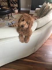 Sadie says lets play