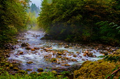 Misty Walk (stevenbulman44) Tags: mist water river rock forest canon 2470f28l activity green lseries vancouver summer