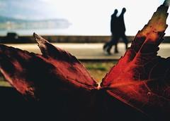 Autumn (PattyK.) Tags: hellas balkans ellada ioannina giannina giannena epirus ipiros autumn leaf october silhouettes greece grecia griechenland 2019 ιωάννινα γιάννενα ήπειροσ βαλκάνια huaweip9 waterfront lakeside lakefront φύλλα bythelake φθινόπωρο σιλουέτεσ οκτώβριοσ