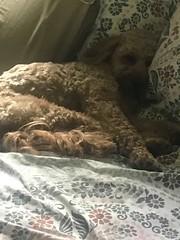 Honey napping