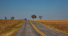 The way home (Millie Cruz (On and Off)) Tags: country road trees lines yellow outdoors perspective harvest field landscape rural evening sky ef24105mmf4lisusm canoneos5dmarkiii mood flickrlounge weeklytheme