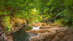 View From Miners Bridge (Aron Radford Photography) Tags: yellow miners bridge wales snowdonia betwsycoed river afon llugwy water strem outdoors nature landscape uk