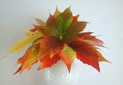 autumn leaves (majka44) Tags: lifestyle leaves autumn stilllife white colors 2019 nice atmosphere vase october soft green yellow orange