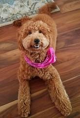 Sadie being a good girl