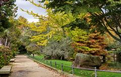 Colores del otoño-_DSC5432 (peruchojr) Tags: parque árbol otoño paseo roca castrelos vigo galicia