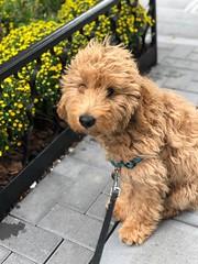 Murphy going for a walk