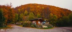 Autumn Vibes (Filippo Rimondini - HIGHERBITRATE) Tags: