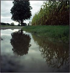 Herbstsee (Ulla M.) Tags: mittelformat 6x6 analog canoscan8800f pfütze puddle seagull4bi freihand dof expiredfilm tlr rainydays umphotoart analogue film analogphotography filmphotography filmshooter ishootfilm filmisnotdead herbst autumn mediumformat