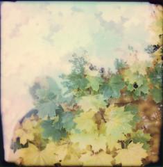 autumnal whispers (Neko! Neko! Neko!) Tags: colours autumn dream whispers spectres shadows emotion expressive polaroid polaroidoriginals analogue rb67