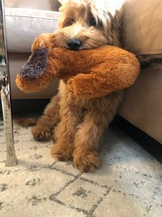 Murphy with his stuffy