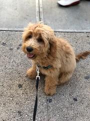 Murphy always walking