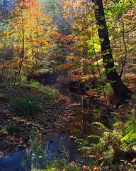 Herbst am Fluss (Naturportal) Tags: panasonic dmcgx8 olympus m1240mm f28 herbst autumn farben colors natur nature river fluss wald forest sachsen