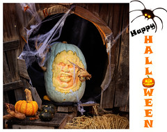 Happy Halloween ! (FocusPocus Photography) Tags: halloween kürbis pumpkin spinnen spiders cobweb spinnennetz