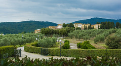 2019 Tuscany-Riviera-29 (Michael L Coyer) Tags: italy tuscany olive olivegrove olivetree orchard village villa city town gate road lane mountain hill hedge grove streetlight