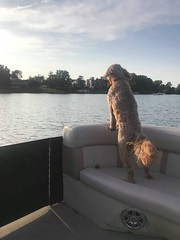 Honey says this is my lake