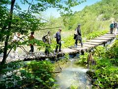 Croatie, le Parc du Lac Plitvicka, les passerelles en bois suive la rivière (Roger-11-Narbonne) Tags: croatie parc lac plitvicka eau bateau poisson embarcadère arbre passerelle pont