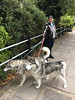 Huskies (SReed99342) Tags: london uk england woman huskies dog skeleton hoodie jacket stjohnswood