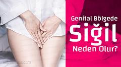 Anglų lietuvių žodynas. Žodis genital reiškia a med. lytinis, lyties lietuviškai.