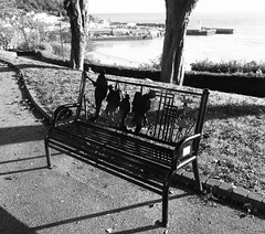 The bench in black & white (phil da greek) Tags: blackwhite uk northyorkshire scarborough neverforget