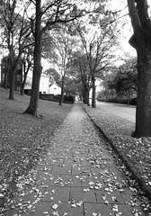 Peasholm in black & white. (phil da greek) Tags: blackwhite uk northyorkshire scarborough peasholm