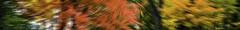 Autumn in Full Swing (soniaadammurray - On & Off) Tags: autumn leaves colours trees sky look beauty appreciation shadows reflections exterior nature artchallenge spotlightyourbestgroup manipulated experimental lightroom photoshop abstract collaboration barbarastanzak challenge85abstract cof085mari cof85cott cof085ronn cof085dmnq cof085unic cof085uki